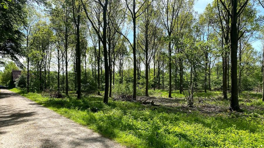 Skovområde ved Hollufgård, hvor unge skal skabe værker